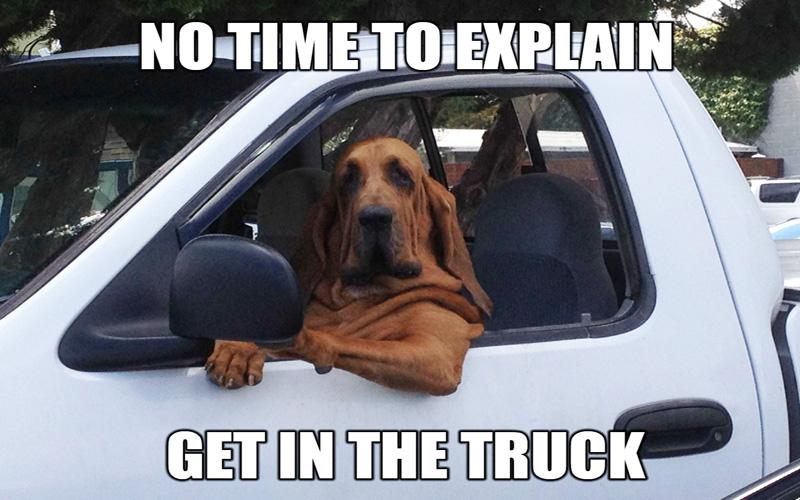 Name:  funny-dog-driving.jpg Views: 536 Size:  158.5 KB
